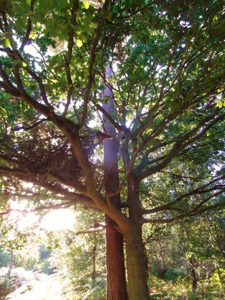 hugging trees at Rendlesham Forest