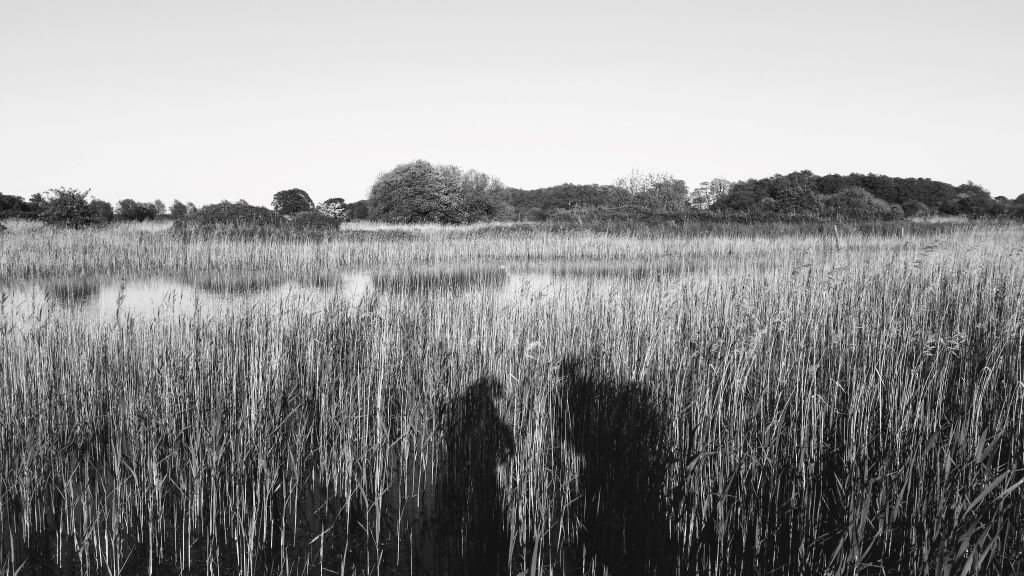 adventure with dementia - shadows on the reedbeds at redgrave and lopham fen, suffolk
